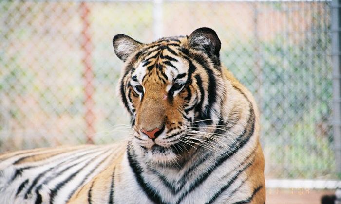 Tiger Creek Wildlife Refuge - Winona: Wildlife-Refuge Visit for 2, 4, or 10 at Tiger Creek Wildlife Refuge (Up to 50% Off)