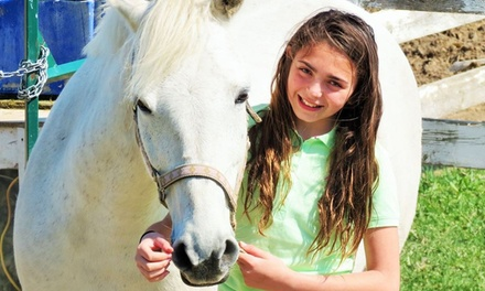 Introductory or Assessment Horseback-Riding Lesson for Two, Four, or Six at Springfield Stables (Up to 57% Off)