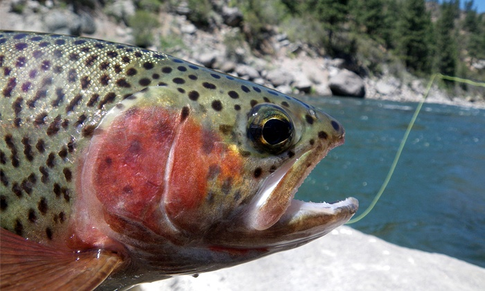 Stillwater Guide Service - Reno Southeast: Half-Day Dry-Land Fly-Fishing Lesson for One or Two from Stillwater Guide Service (Up to 55% Off)