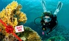 New Zealand Diving - New Zealand Diving: Dive Charter with Gear Hire for One ($225) or Two People ($450) with New Zealand Diving, Auckland (Up to $650 Value)