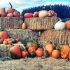 Up to 45% Off Pick-Your-Own Pumpkins