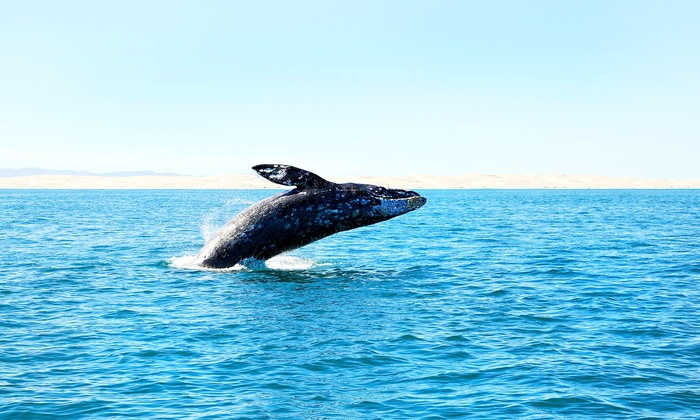 Cape May Whale Watcher - Cape May: Whale and Dolphin Watching from Cape May Whale Watcher (Up to 52% Off). Four Options Available.