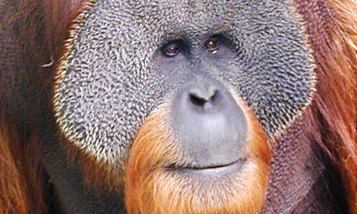 Louisville Zoo - The Highlands: Admission for Two, Four, or Six at Louisville Zoo (Up to 49% Off)