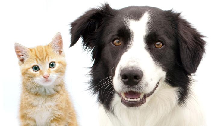 Dr. Nina's Animal Hospital - Sarasota: Two Nights of Pet Boarding or a Full Canine or Feline Dental Cleaning at Dr. Nina's Animal Hospital (Up to 67% Off)