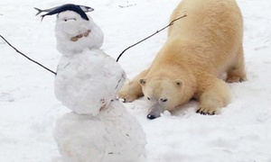 The Buffalo Zoo: $39 for Admission for One to the Arctic White Out Cocktail Party for The Buffalo Zoo ($50 Value)