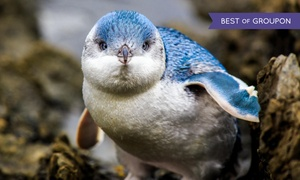 Adventure Aquarium: $130 for a One-Year Family Explorer Annual Pass at Adventure Aquarium ($195 Value)