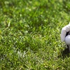 Kissimmee Bay Country Club – Up to 73% Off Golf