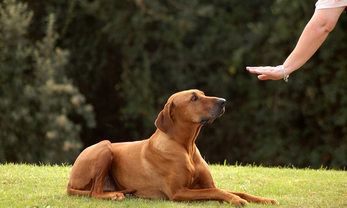 Dynamite Dog Training - Lakeview: Five or Seven Dog Training Sessions at Dynamite Dog Training (Up to 55% Off)