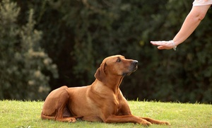 Dynamite Dog Training: One or Seven Dog Training Sessions at Dynamite Dog Training (Up to 55% Off)