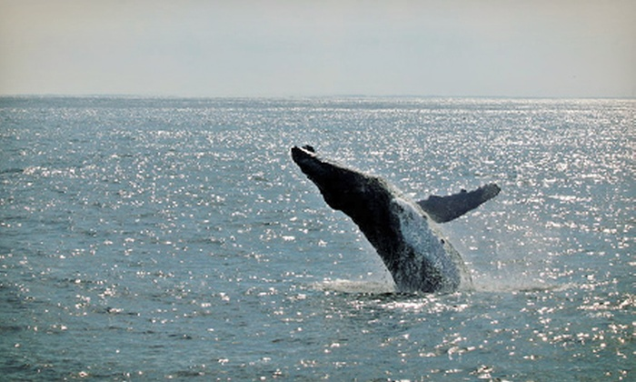 Cape May Whale Watch & Research Center - Utsch's Marina: Whale or Dolphin Watching from Cape May Whale Watch & Research Center (Up to 54% Off). Four Options Available.