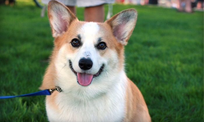 Scooper Trooper - Anchorage: $45 for Eight Weeks of Dog-Waste Removal from Scooper Trooper ($115 Value)