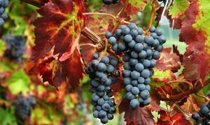 Cantina Ortenzi: Visita guidata cantina e degustazione vini per 2 o 4 persone alla Cantina Ortenzi a Fermo (sconto fino a 55%)