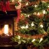 Half Off at A1 Christmas Trees