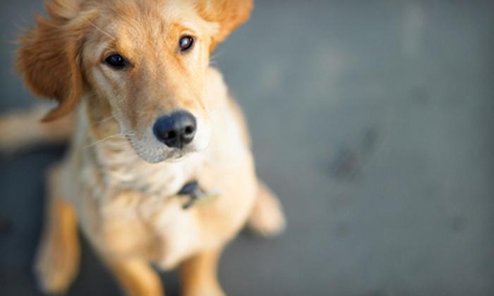 Ann Road Animal Hospital - North Las Vegas: Veterinary Exam, Pet Boarding, or Grooming at Ann Road Animal Hospital in North Las Vegas (Up to 76% Off)