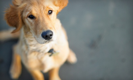 Complete Pet Physical Exam (a $40 value) - Ann Road Animal Hospital in North Las Vegas