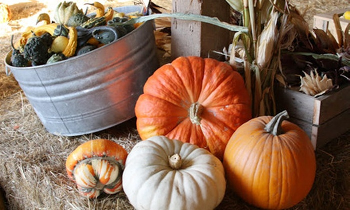 Airlie Hills Harvest Festival & Pumpkin Patch - Monmouth-Independence: Visit with Unlimited Activities for Two or Four at Airlie Hills Harvest Festival & Pumpkin Patch (Up to 52% Off)