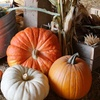 Up to 52% Off Harvest Festival and Pumpkins