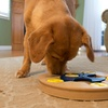 Interactive Dog Toy: Spin 'n' Scoop