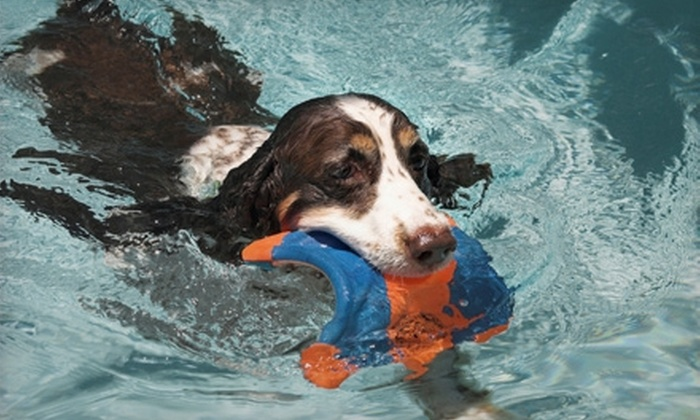 SpawZ Dog - North College Park: Dog Therapy Swim Session or Five-Pack of Sessions at SpawZ Dog Doggie Daycare