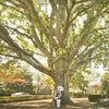 Half Off Tree-Planting Services