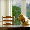 Half Off Pet Food and More from PetFoodDirect.com