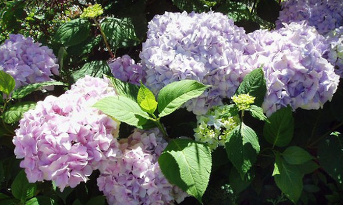 Wells Nursery - Mount Vernon: $25 for $50 Worth of Plants at Wells Nursery in Mount Vernon