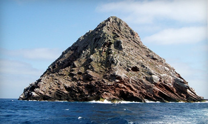 Pacific Nature Tours - San Diego : $89 for an Eight-Hour Coronado Islands Cruise with Breakfast, Lunch, and Drinks from Pacific Nature Tours ($195 Value)