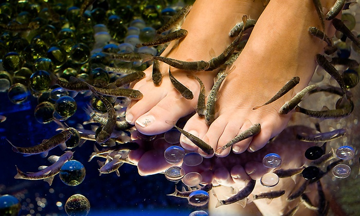 $19.99 for a 30-Minute Fish Pedicure from Docteur Fish ($40 Value), 16 Locations Available