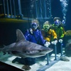 Up to 21% Off Underwater Dives with Sharks