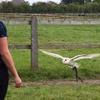 Birds of Prey Experience