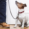 Up to 31% Off at Eric's Pet Services, Inc.