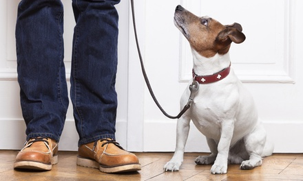 Ten 15- or 30-Minute Dog Walks and / or Pet Visits from Crescenti Moon Pet Sitting (Up to 62% Off)