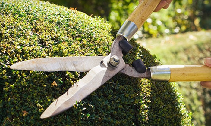 Eco Landscapes - Dallas: Six Lawn-Mowing Treatments or $99 for $200 Toward Landscaping and Cleanup Services from Eco Landscapes