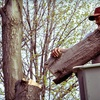 Up to 54% Off Tree-Trimming Services