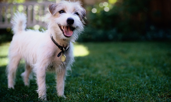 Pretty Paws Pet Grooming - West Des Moines: Two Dog Groomings at Pretty Paws Pet Grooming in West Des Moines (Up to 52% Off). Three Options Available.