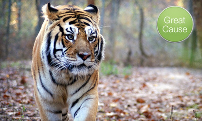 Carolina Tiger Rescue - Raleigh / Durham: If 40 People Donate $6, Then Carolina Tiger Rescue Can Feed More Than 70 Wild Cats for One Day