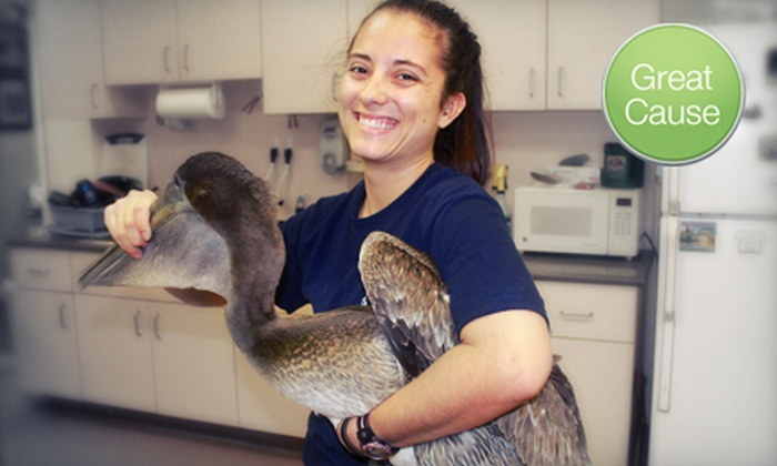 Pelican Harbor Seabird Station - Miami: If 11 People Donate $5, Then Pelican Harbor Seabird Station Can Rescue Injured Seabirds on a Wildlife Rescue Trip