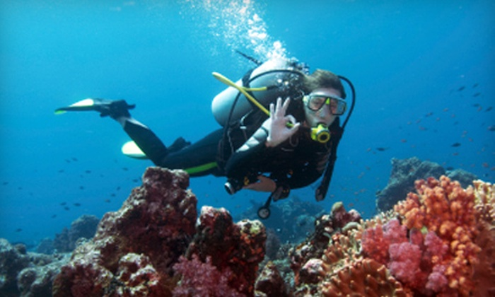 Bay Breeze Dive Center - Gulf Breeze: Discover Scuba Class or Open-Water-Certification Course at Bay Breeze Dive Center in Gulf Breeze (Up to 62% Off)