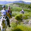 Up to 67% Off Horseback Rides