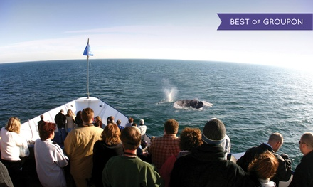 Whale and Dolphin Watching Adventure for Two, Four, or Six from Hornblower Cruises & Events (Up to 39% Off)