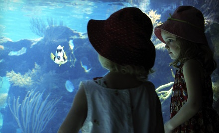 1-Day Pass with a Donation Option  - Idaho Public Aquarium in Boise