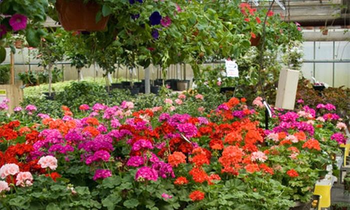 Cross Creek Nursery - Richmond: $20 for $40 Worth of Plants and Garden Accessories at Cross Creek Nursery