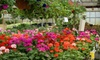 Cross Creek Nursery - Richmond: $20 for $40 Worth of Plants and Garden Accessories at Cross Creek Nursery