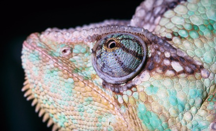 General Admission for 2 (up to a $30 value) - Reptilia Inc. in Vaughan