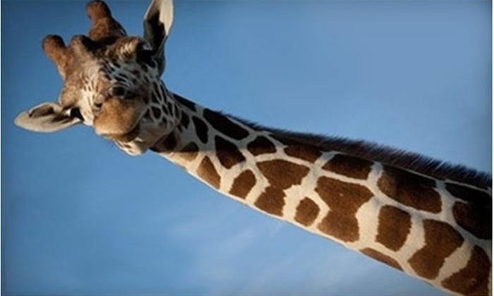 African Safari Wildlife Park - Danbury: African Safari Wildlife Park Visit on Weekday or Any Day in Port Clinton (Up to 64% Off)