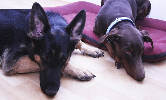 K-9 Care - Buffalo: Two Days of Pet Sitting Services from K-9 Care Services (50% Off)