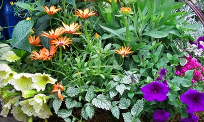 The Weed Lady - Grand Blanc: $10 for $20 Worth of Plants, Home Goods, and Gardening Supplies at The Weed Lady in Grand Blanc