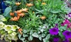 $10 for Plants, Home Goods & More in Grand Blanc