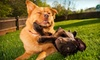 Up to 61% Off Dog Grooming and Boarding