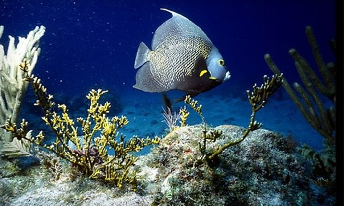 Biscayne National Underwater Park - Homestead: Boating, Snorkeling, and More at Biscayne National Underwater Park. Two Options Available.